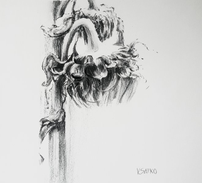 Sunflowers, 15 x 20 inch, charcoal on paper